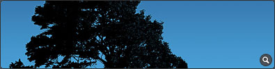 Tree On Blue Sky Desktop BG - Click to see full-size image